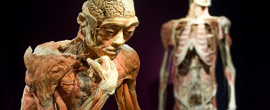 human body exhibition 1