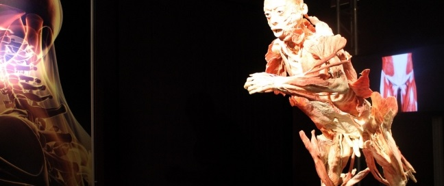 human body exhibition 3