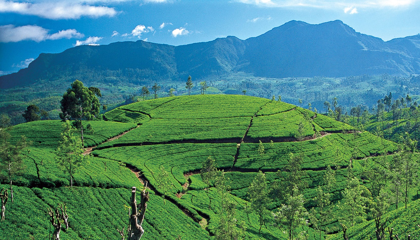 Sri Lanka – 10 ciekawostek oCejlonie
