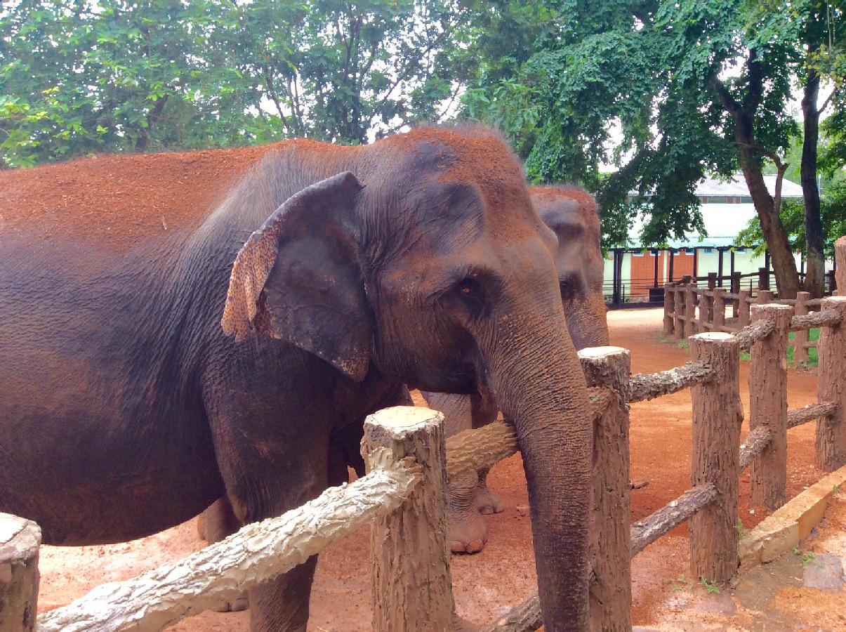 Słonie Sri Lanka jamowie.to
