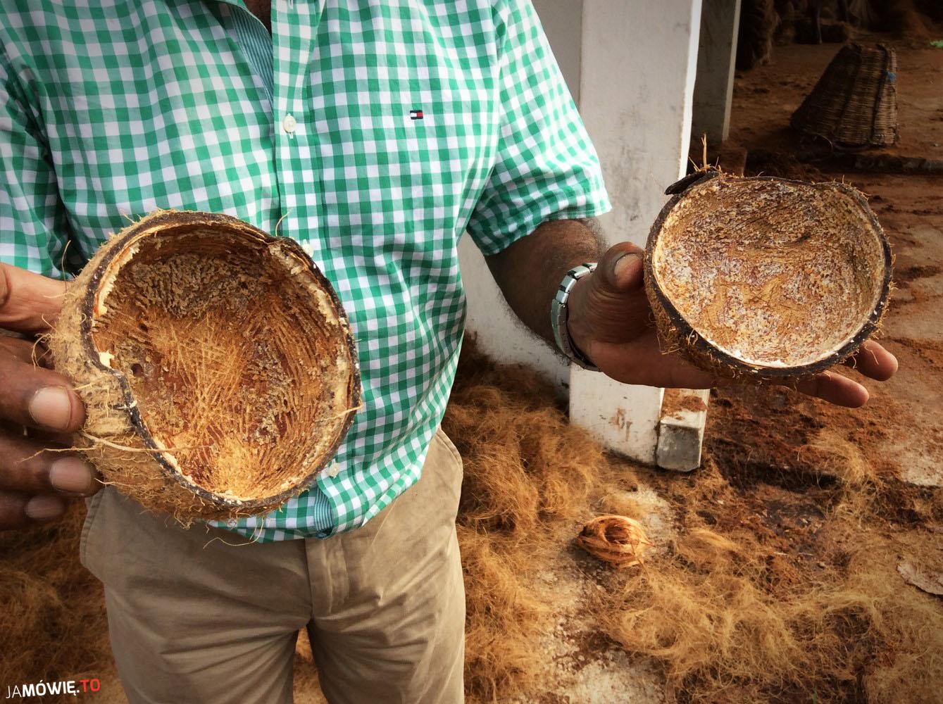 Krótka historia kokosa, czyli jak powstają wiórki kokosowe?