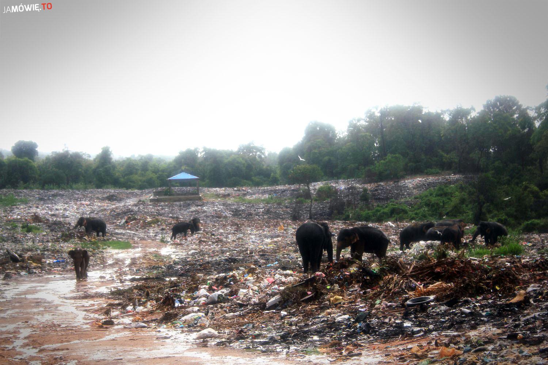 Sri Lanka - słonie na wysypisku - https://jamowie.to - Ja mówię TO