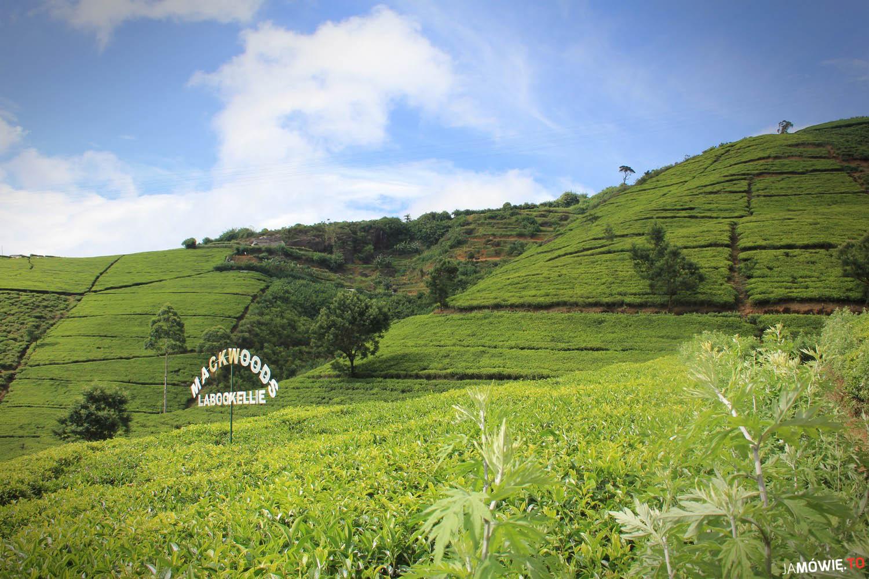 Jak zrobić dobrą herbatę? + konkurs