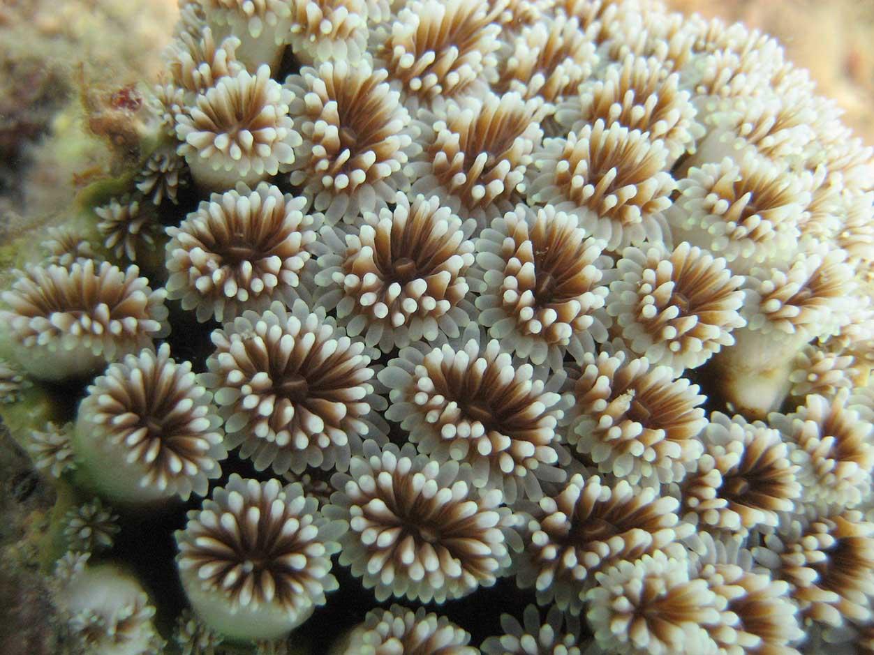 Wielka rafa koralowa - Ja mówię TO