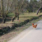 Biecz i okolice - Ja mówię TO www.jamowie.to